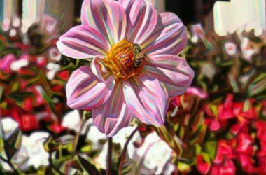 prisma photo fleur